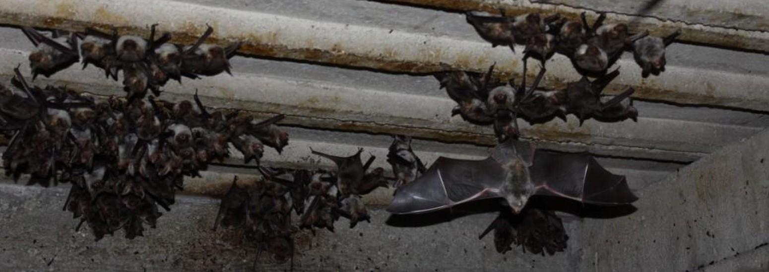 Pszczoły i nietoperze powróciły do Puszczy Kozienickiej