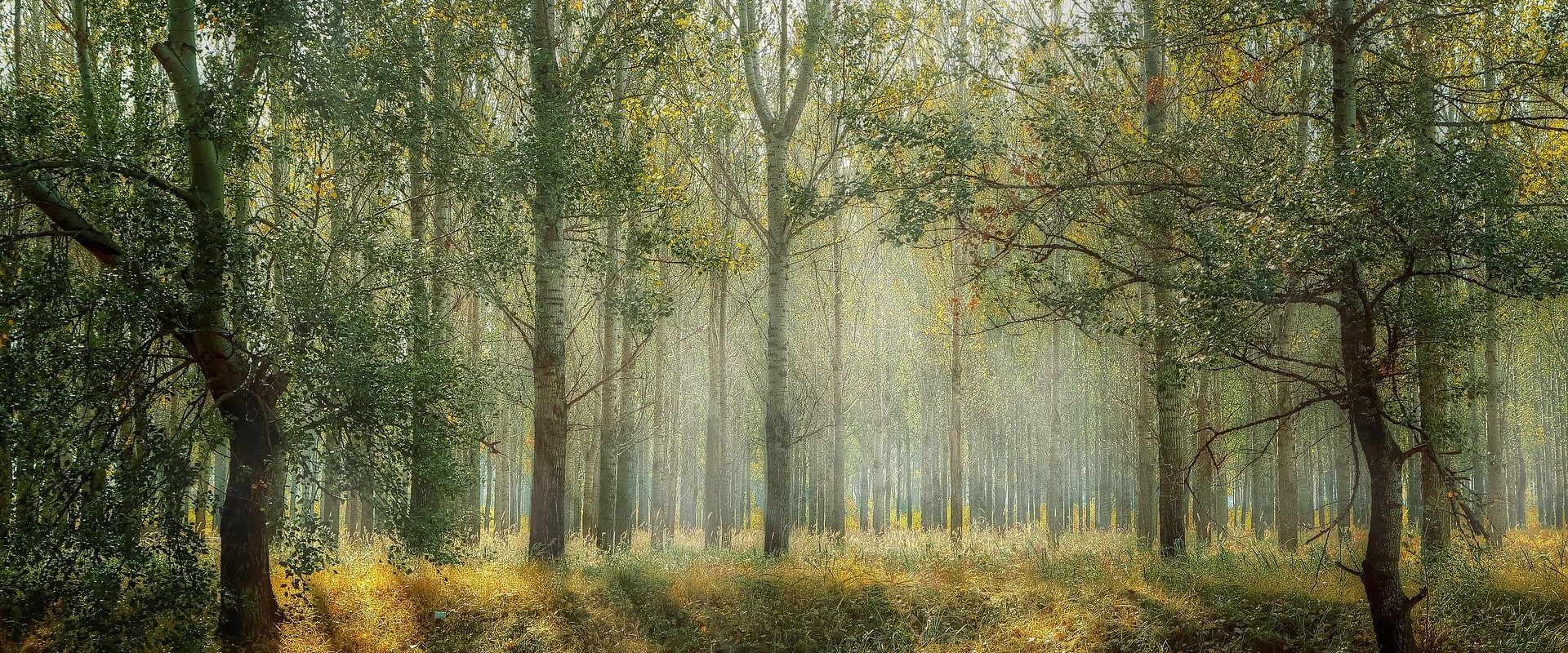 Światowy Dzień Lasów. Każdy z nas ma wpływ na ich kondycję