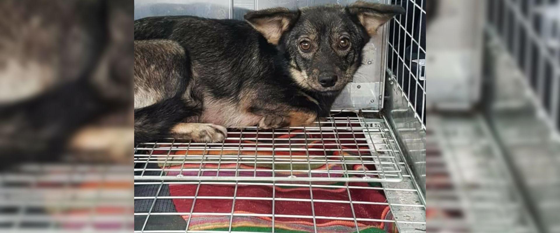 Podziękowanie dla PTOnZ za uratowanie 7 bezpańskich psiaków