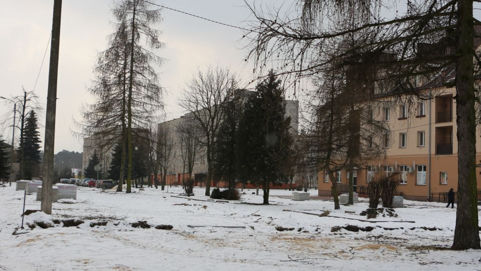W Pionkach znikają drzewa