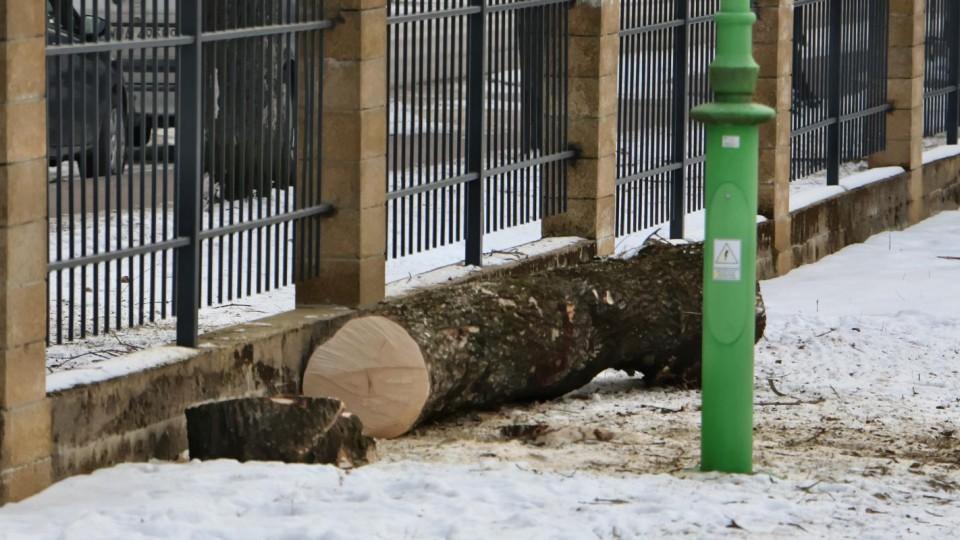 Nie było zgody na wycinkę drzew na Ogródku Jordanowskim